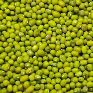 Distributor Kacang Hijau Green Mung Bean Supplier Indonesia Icon